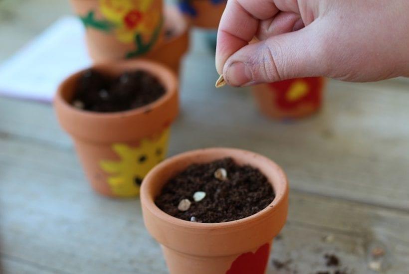 Thumbprint Flower Pot Gift Ideas