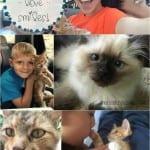 Kittens, Love & Smiles
