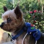DIY Pet Backpack – Going to Grandma's