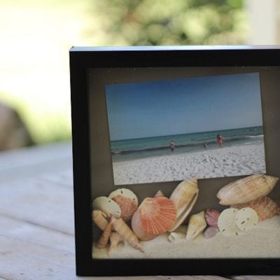 Display Seashells from the Beach