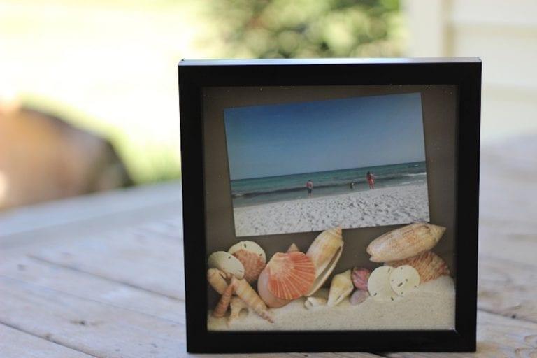Display Seashells from the Beach