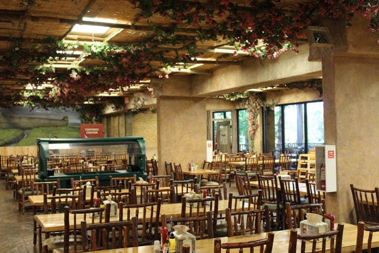 Cafe Noah 10 things to about the creation museum hobbies on a budget