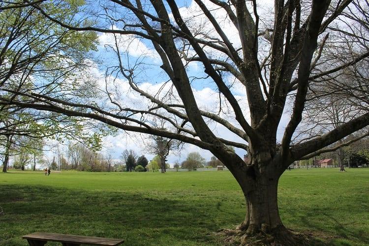 hermitage tree