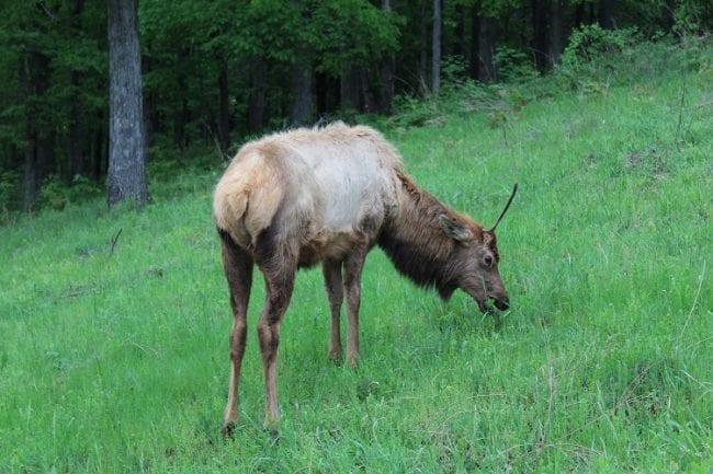 ekl bison prairie 7