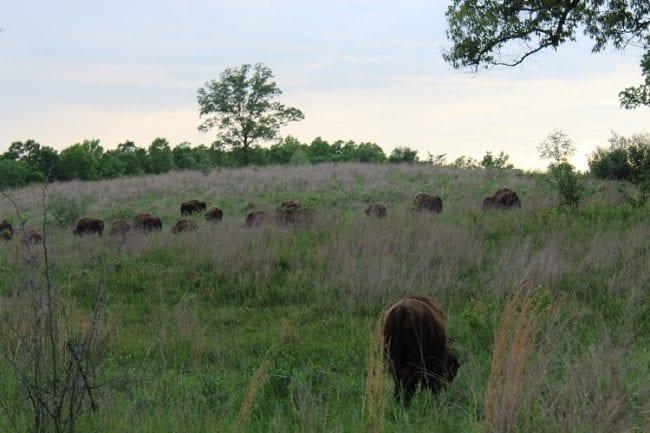 Elk Bison Prairie National Recreation Area