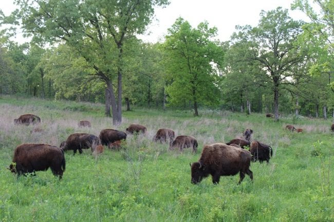 Elk & Bison Prairie National Recreation Area