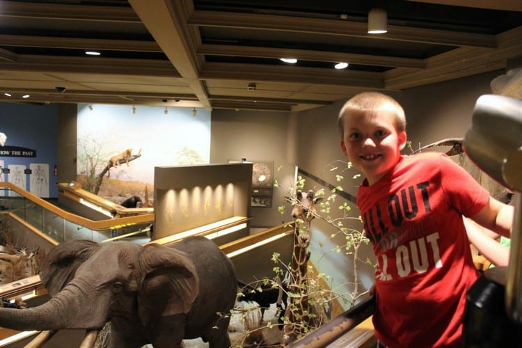 Visiting the Springfield Museums
