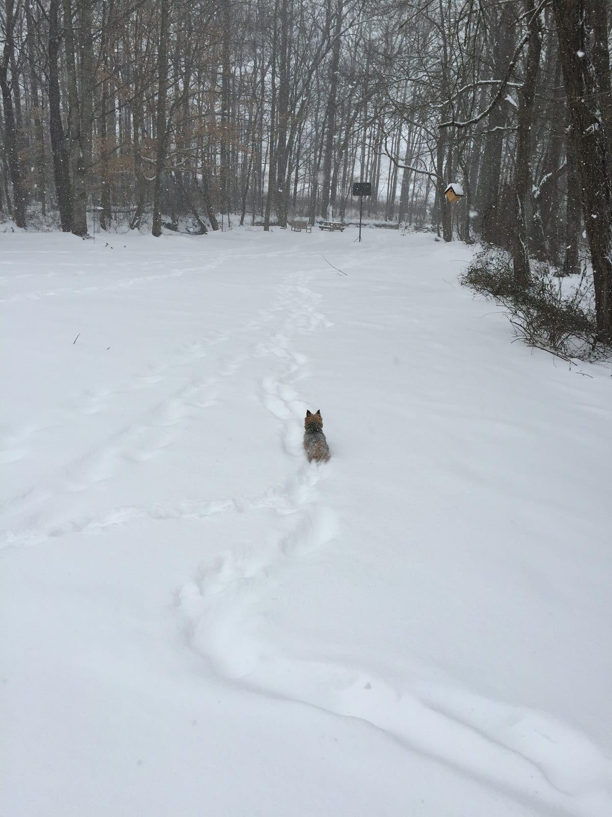 henry-in-snow