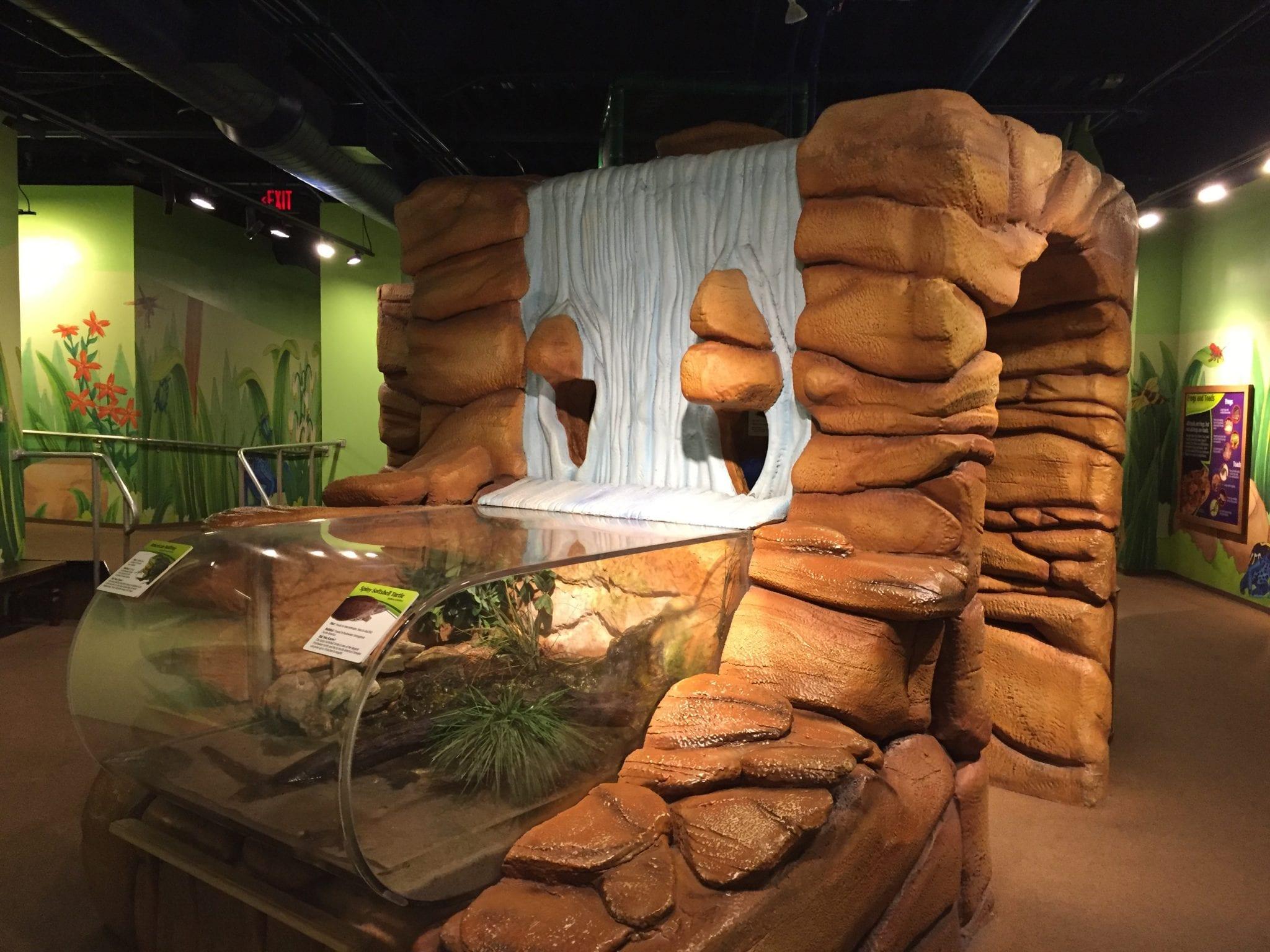 Frog Bog - Newport Aquarium