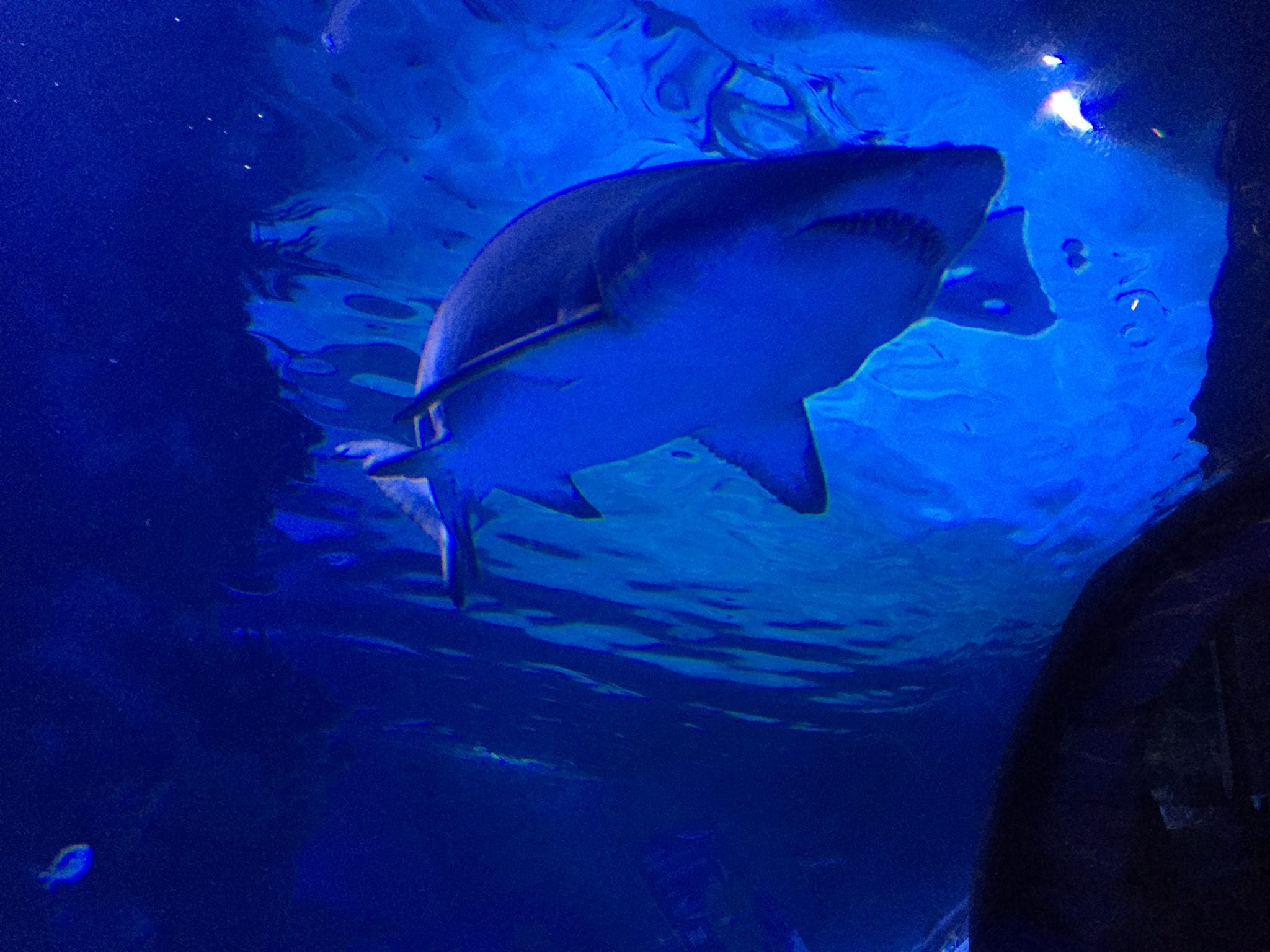 Shark Bridge - Newport Aquarium, Newport, Kentucky