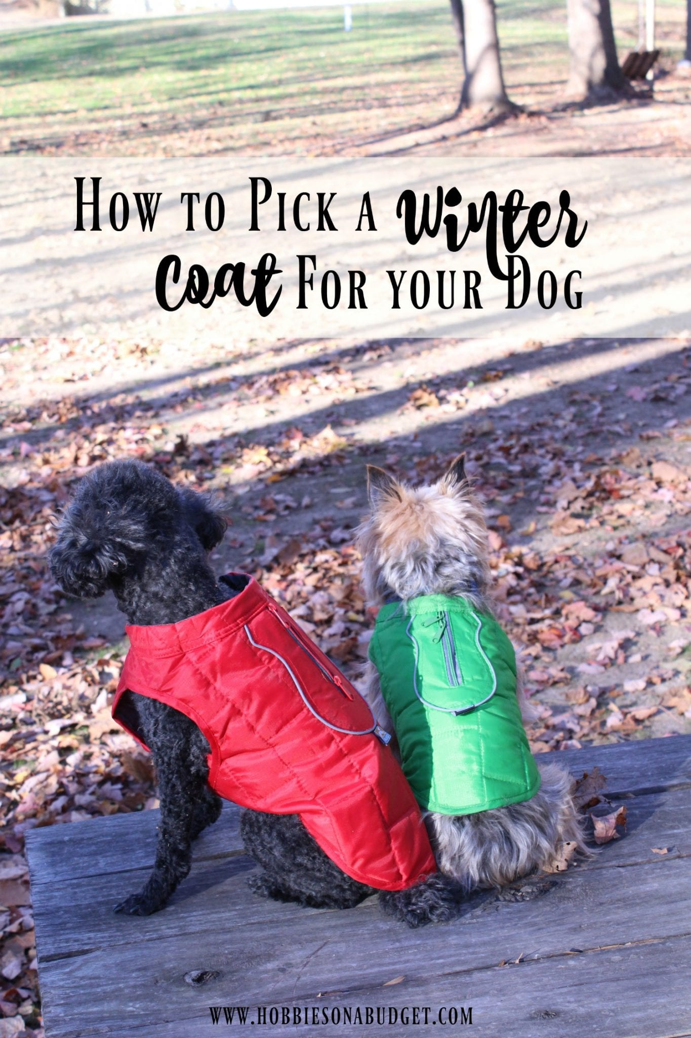 winter-coat-for-your-dog