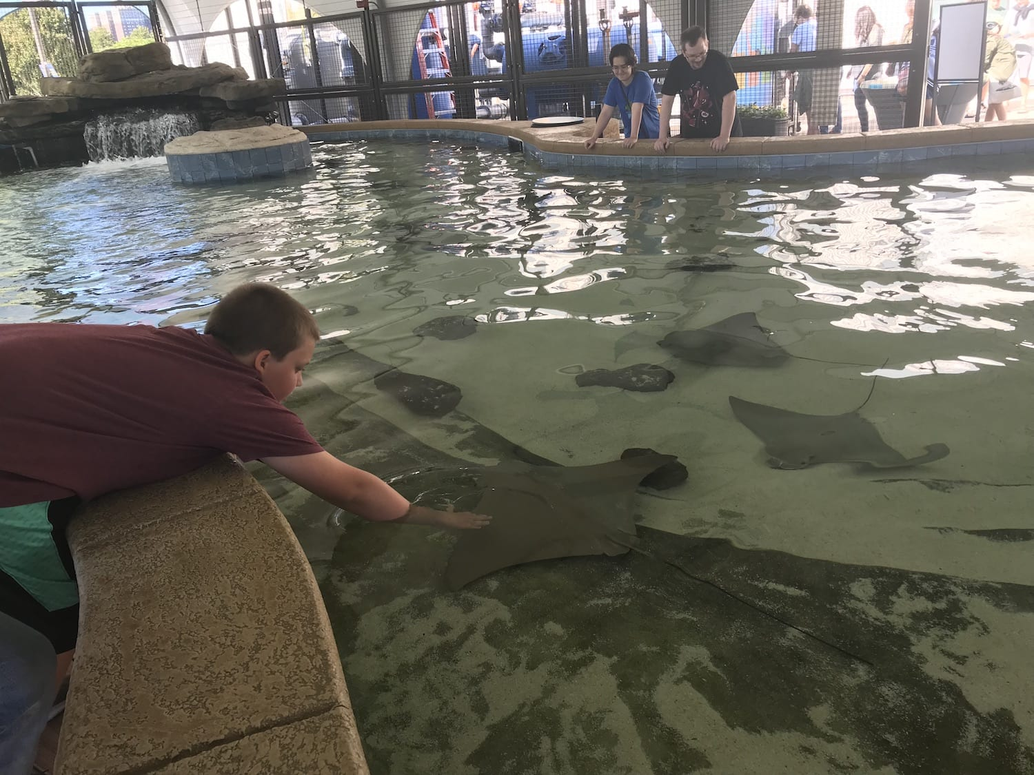 Things to Know about Shedd Aquarium