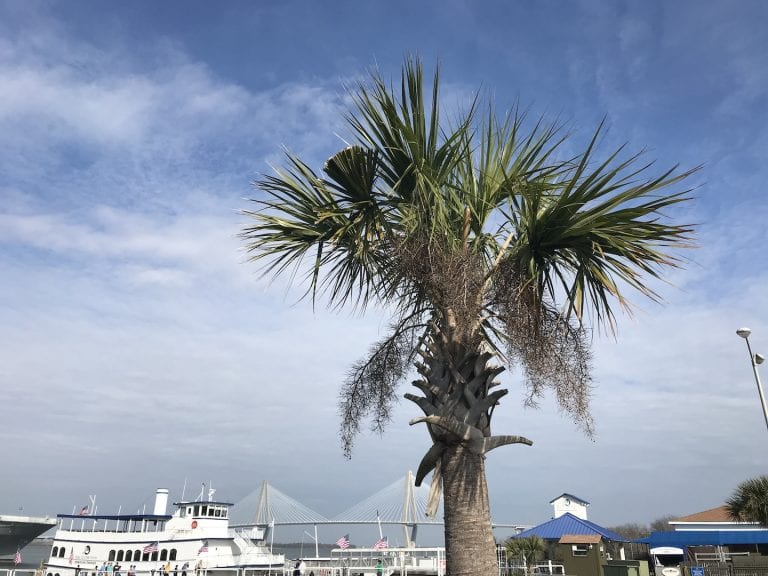 10 Reasons to Visit Charleston