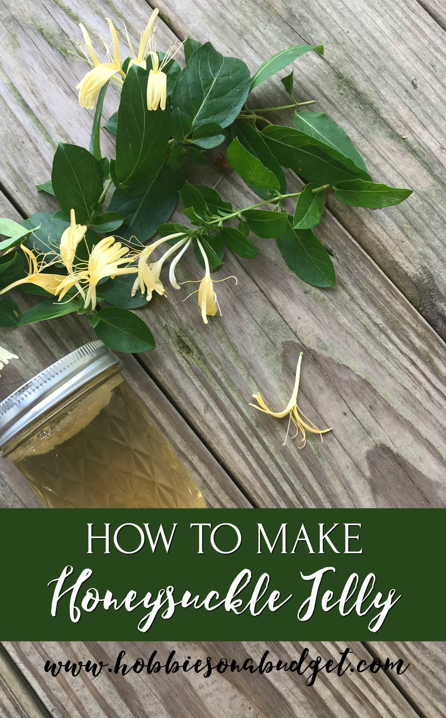 how to make Honeysuckle Jelly