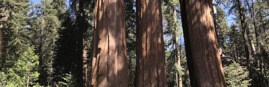 Visiting the Giant Sequoias: Kings Canyon National Park