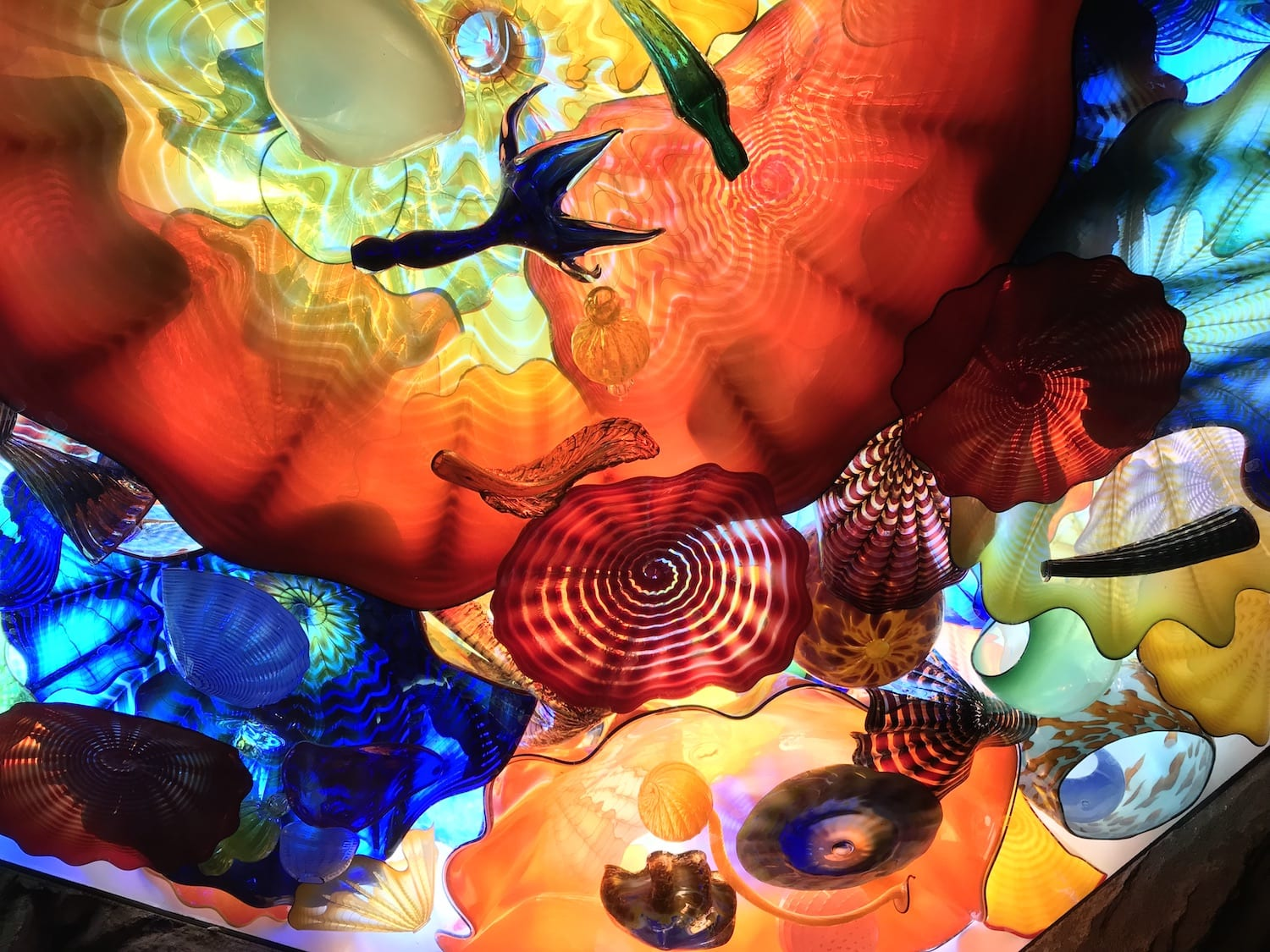 Dale Chihuly at Franklin Park Conservatory in Columbus Ohio