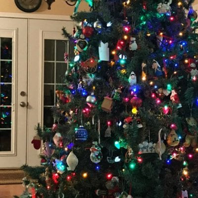 Online Tour of Christmas Trees