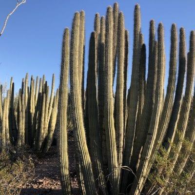 Things to know: Desert Botanical Garden