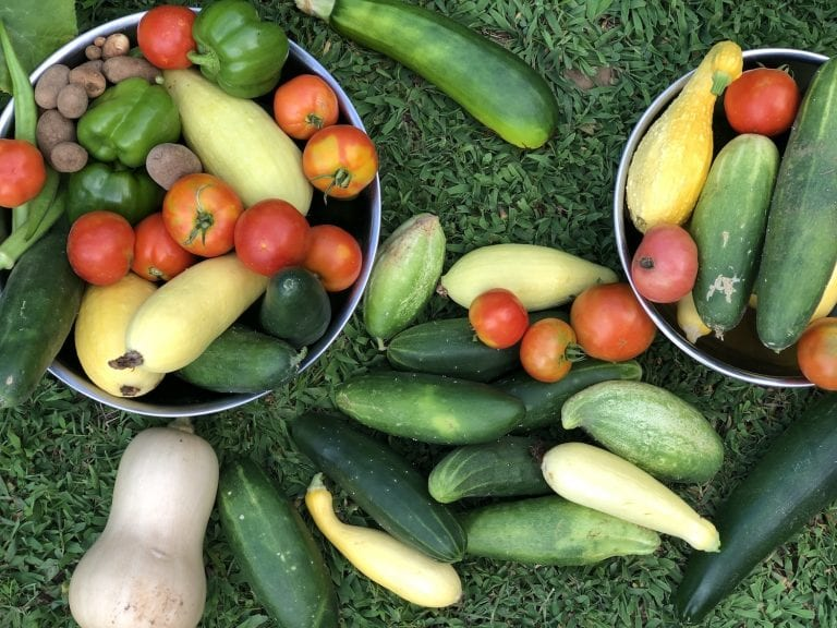 Top Things to Know when Preserving Garden Produce