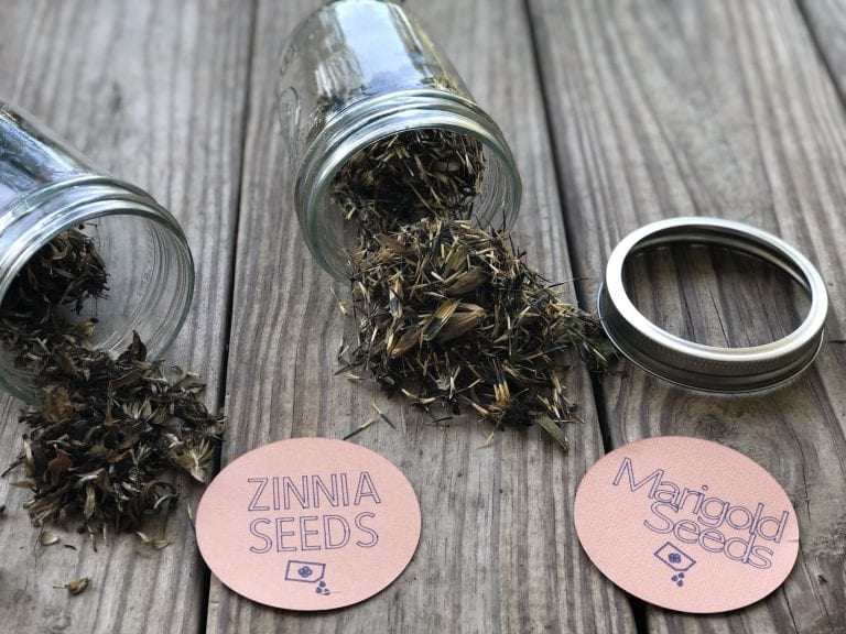 How to Label & Save Zinnia and Marigold Seeds