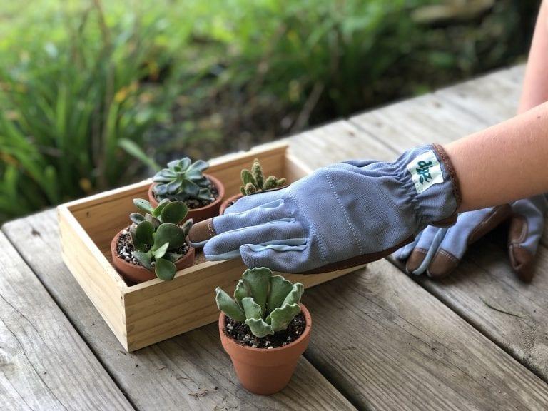 How to Create a Portable Succulent Garden