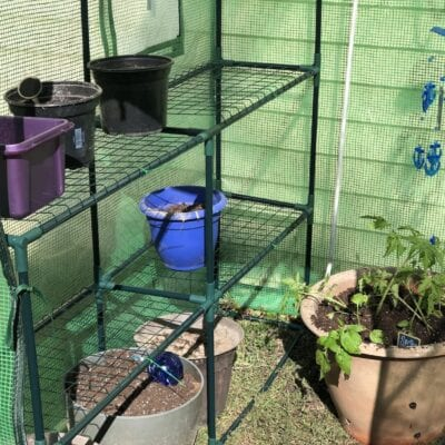 The Greenhouse Experiment Begins