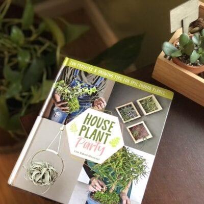 Houseplant Help for the Clueless Gardener