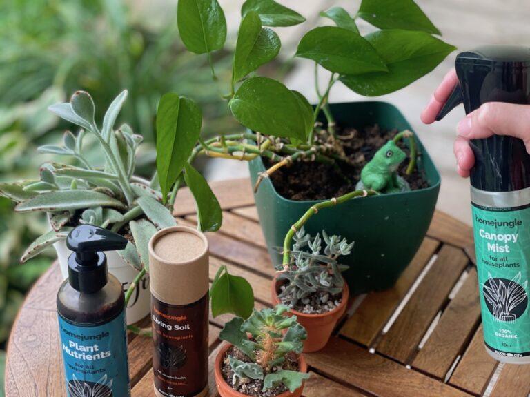 Houseplant Intervention for the Forgetful Gardener